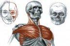 anatomia_destaque